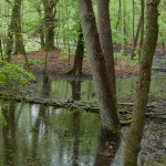 Fladderiepenbosje op inundatieplek  langs Hierdense Beek